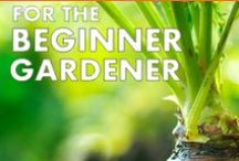 Creating a Vegetable Garden - Good Life Gardening / Tips, inspiration and ideas for creating a small vegetable garden with raised beds from scratch