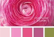 colour inspiration / by jude .