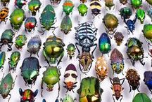 Insects,bugs and creepy crawlies.
