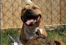 4 pups / by cc mira