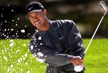 :::::: Tiger Woods ::::::