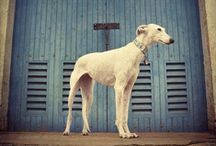 Dogs / by Carol Gowin