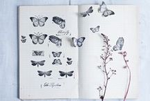The butterfly effect / All things butterfly and beautiful.  Prints, patterns and home accessories featuring butterflies.