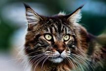 I like BIG CATS / by jude .