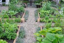 my garden / by Karen Yee