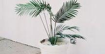 NATSUKASHI p l a n t / +green +botany +leaves +indoor +landscape +succulent