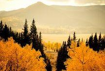 autumn  / by Tanya Lamb