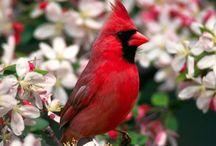 Birds / by Cheryl Boutte