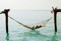splendid summer / by ali deknatel