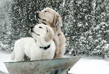Furry Friends / by Karen Wyns