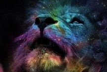 The Wondrous Lion