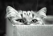 Kitties / by Jeni