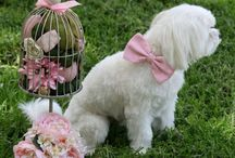 My dog loves pink / Chic Handmade Pink Dog Collars,Pink  Bow tie, Pink  Wedding Dog Collars, Pink  Dog Wedding Accessories, Pink Floral Collars  www.ladogstore.com