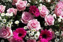 """Dagens bästa Blommogram / Våra ca 700 anslutna butiker skapar och levererar tusentals Blommogram varje dag. Vi uppmanade dem att dela med sig av """"Dagens bästa Blommogram"""" - här är resultatet!"""