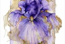 Irises / by Mary Stang