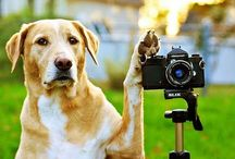 How to shoot animals
