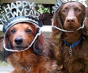 New Year Pawty!!! / Happy New Year, New Year, New Year Pawty, Pawty, New Year with dogs, pets, cats, party  LaDogStore.com