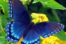 Butterflies / by Lisa Deere