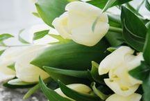 Fleur ~ Flowers