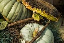 L'Automne ~ Autumn ~ Fall Inspirations / by Suzanne Walizer