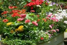 Container Gardens / Any plant contained in any container / by Cozy Little House