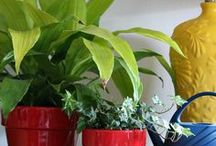House Plants / Container gardening for indoors.