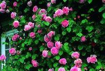 Tuin & Klussen - Garden / De handigste artikelen om aan de slag te gaan in je huis of tuin