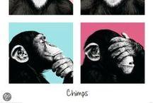Dier - Animals / Ontdek de leukste dierenartikelen bij bol.com!