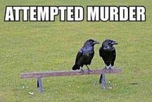 Funny / by Trevor Ledford