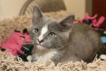 Adopted Cats / by PAWS of Coronado