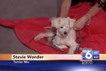 PAWS in the News / by PAWS of Coronado