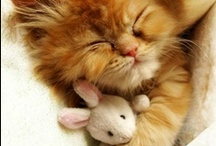 LOL Cats! / funny cats, cute cats, pretty cats, sweet cats, and kittens / by Wheels Up
