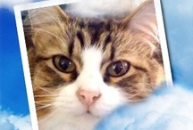 In Loving Memory of my Furry Baby Bruce 1997-2012 / by Mia Doland