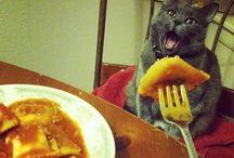Cats + Dogs / Strange animals.