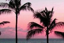 Summer + Beach