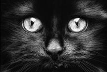 Black is beautiful / by Kitty~ no pin limits Oskin )O(