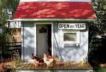 Chickens / by Robin Enochs