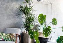 plant inspiration