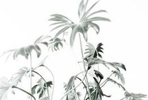 Botanical / by Catherine Green