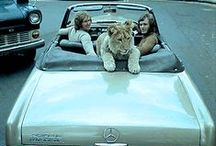 Mercedes-Benz ♥ Pets / Besides the love for the star, we also have a bigh heart for a man's best - and cutest - friend!