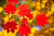 Fall Foliage Autumn Colors / Ozark splendor in October.