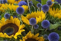 Lavender and Sunflowers / by Danica Fuller - Flora Danica Photography