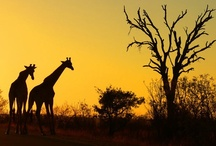 Places To See - Africa