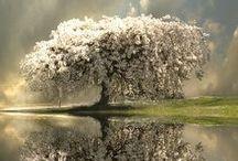 longing for trees / by Aj Brokaw