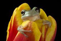 feelin' froggy / by Aj Brokaw