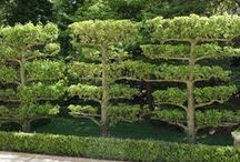 Gardening - Green Walls / Vertical gardens, living walls, overhead plantings, arbors, pleached hedges and more. How could you use vertical and overhead space in your garden for planting?