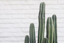 g r e e n e r y / Plants, mostly cacti