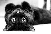 CATS / by Elisa Peloso