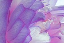 flowers <3 / by Racheal Welker