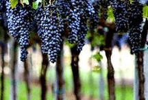Winery & Vineyard